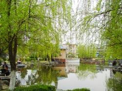 紫舞公园图片